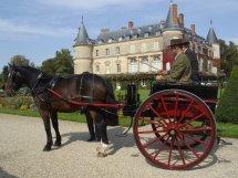 Papou au Concours d'Attelage Tradition du Château de Rambouillet image