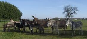 9 ânes à marolles