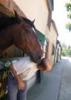 dimanche 16 juillet Twist Christophe les beaux gosses de Marolles (33)