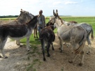 samedi 27 mai ânes cheval colette sébastien christophe charly (14)