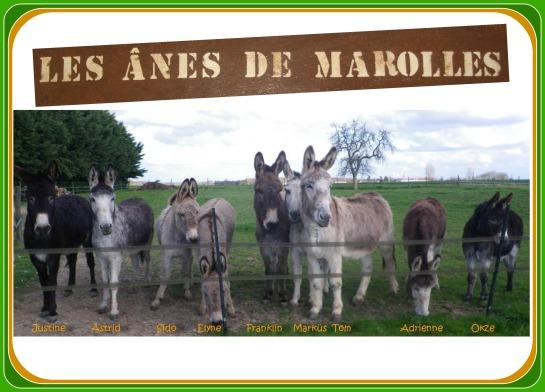 affiche les ânes de marolles en ligne