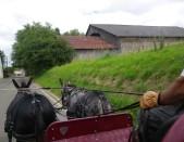 promenade gas justine astrid 19 juin 2018 (48)