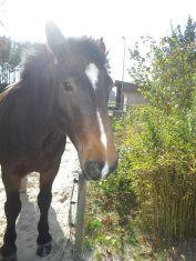 maréchal 18 octobre ânes cheval soleil ciel bleu (1)