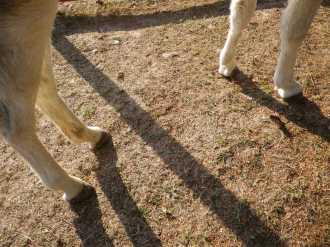 maréchal 18 octobre ânes cheval soleil ciel bleu (16)
