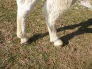 maréchal 18 octobre ânes cheval soleil ciel bleu (19)