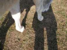 maréchal 18 octobre ânes cheval soleil ciel bleu (20)