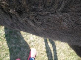 maréchal 18 octobre ânes cheval soleil ciel bleu (22)