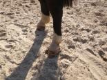 maréchal 18 octobre ânes cheval soleil ciel bleu (24)