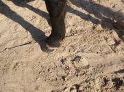 maréchal 18 octobre ânes cheval soleil ciel bleu (25)