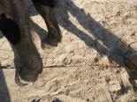 maréchal 18 octobre ânes cheval soleil ciel bleu (26)