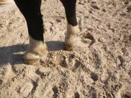 maréchal 18 octobre ânes cheval soleil ciel bleu (27)
