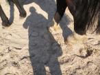 maréchal 18 octobre ânes cheval soleil ciel bleu (28)