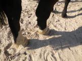 maréchal 18 octobre ânes cheval soleil ciel bleu (29)