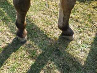 maréchal 18 octobre ânes cheval soleil ciel bleu (3)