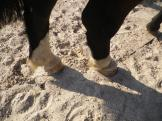 maréchal 18 octobre ânes cheval soleil ciel bleu (30)