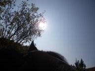 maréchal 18 octobre ânes cheval soleil ciel bleu (32)