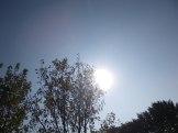 maréchal 18 octobre ânes cheval soleil ciel bleu (33)