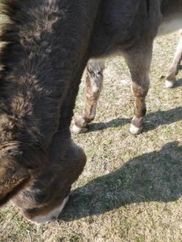 maréchal 18 octobre ânes cheval soleil ciel bleu (36)