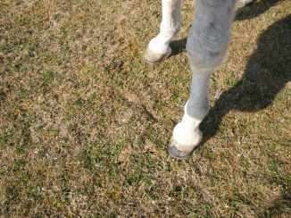 maréchal 18 octobre ânes cheval soleil ciel bleu (5)