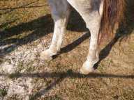 maréchal 18 octobre ânes cheval soleil ciel bleu (8)