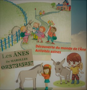 affiche amis ânes découverte activités asines